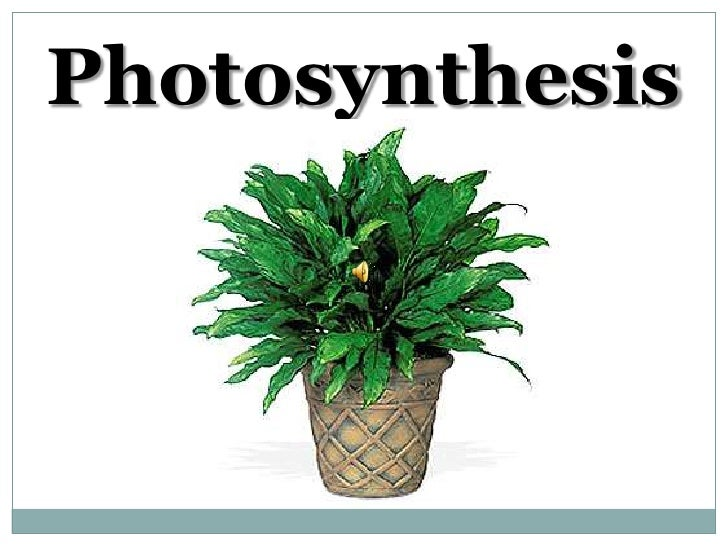 Photosynthesis curso