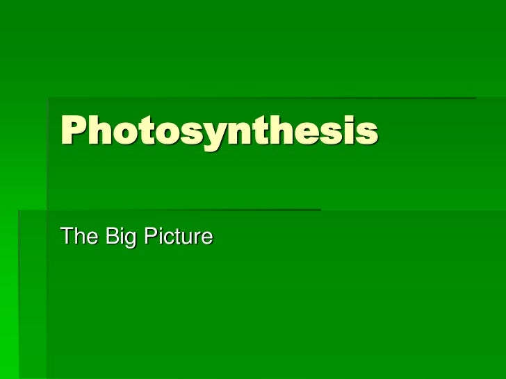 PhotosynthesisThe Big Picture