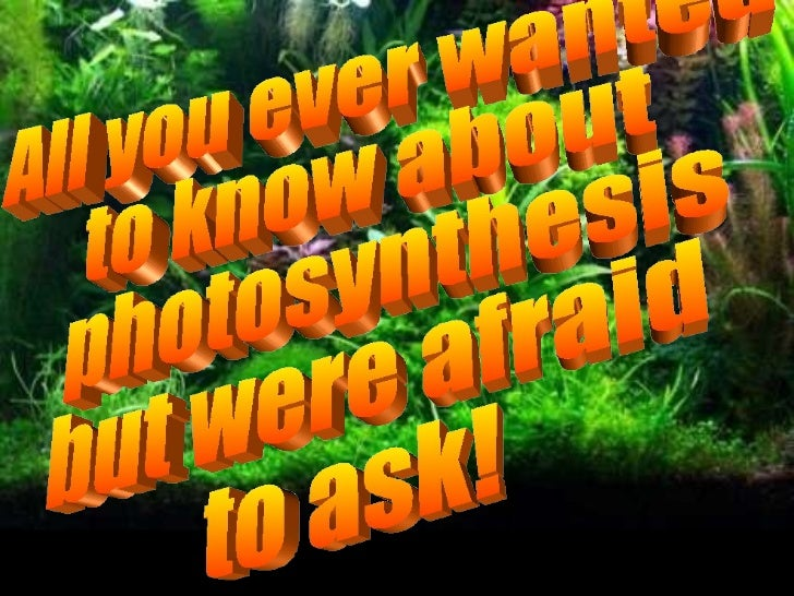 All you ever wanted  to know about photosynthesis  but were afraid  to ask!