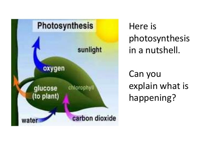 photsynthesis song Who doesnt love the photosynthesis song it just speaks for itself ye know this video was created just for fun i in no way own this song or the lyrics or the.