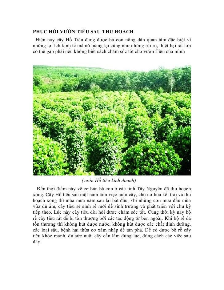 PHỤC HỒI VƯỜN TIÊU SAU THU HOẠCH Hiện nay cây Hồ Tiêu đang được bà con nông dân quan tâm đặc biệt vìnhững lợi ích kinh tế ...
