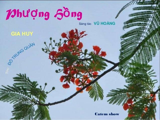 GIA HUY Sáng tác VŨ HOÀNG Catem show Phượng Hồng