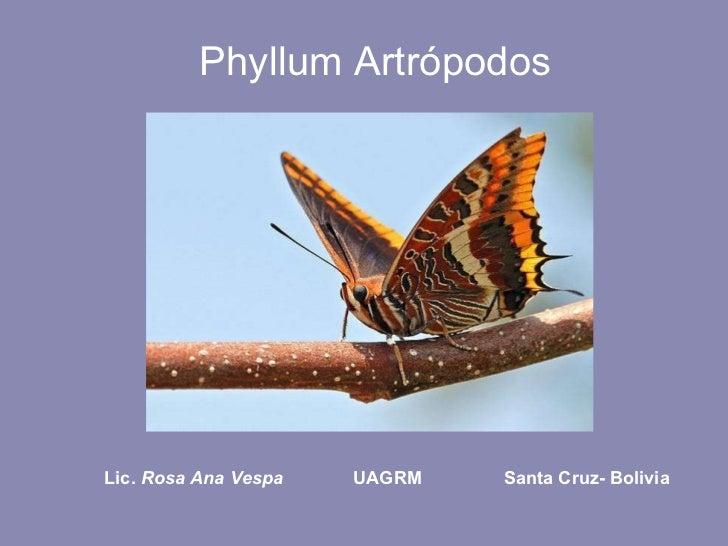 Phyllum Artrópodos Lic.  Rosa Ana Vespa   UAGRM   Santa Cruz- Bolivia