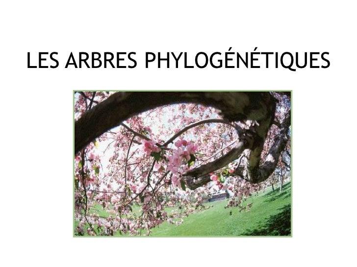 LES ARBRES PHYLOGÉNÉTIQUES<br />