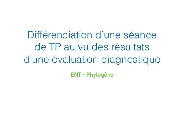 Différenciation d'une séance de TP au vu des résultats d'une évaluation diagnostique ENT - Phylogène