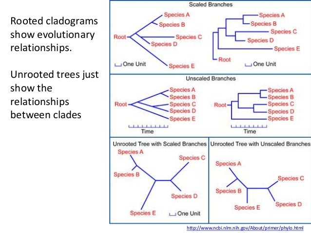 IB Biology Option D.5: Phylogeny and systematics