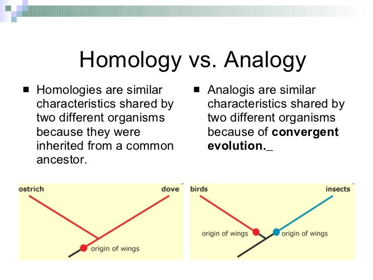 homology and analogy essay animal form and function exampl Homology is contrasted with analogy  the form of construction and the number of bones in these varying limbs an example of this is a bat's wing and a.