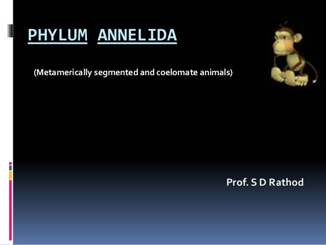 PHYLUM ANNELIDA(Metamerically segmented and coelomate animals)                                             Prof. S D Rathod