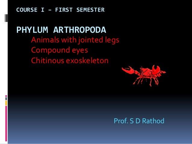 COURSE I – FIRST SEMESTERPHYLUM ARTHROPODA    Animals with jointed legs    Compound eyes    Chitinous exoskeleton         ...