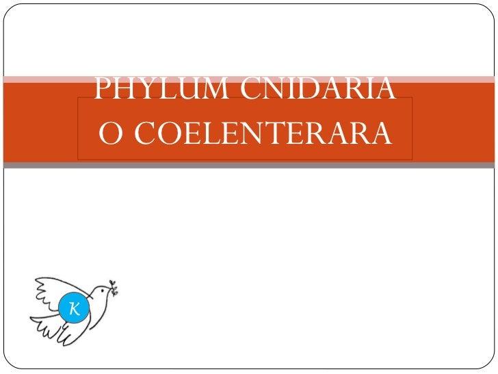 PHYLUM CNIDARIA O COELENTERARA K