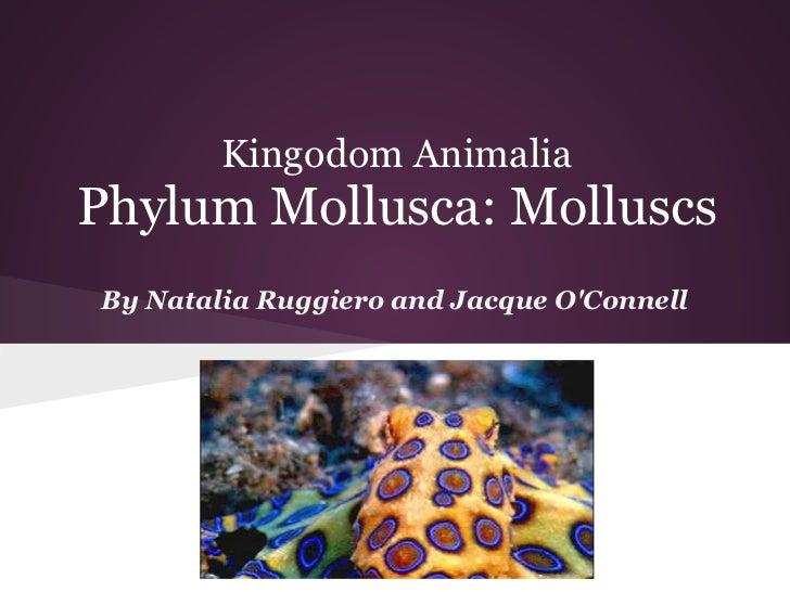 Kingodom AnimaliaPhylum Mollusca: MolluscsBy Natalia Ruggiero and Jacque OConnell