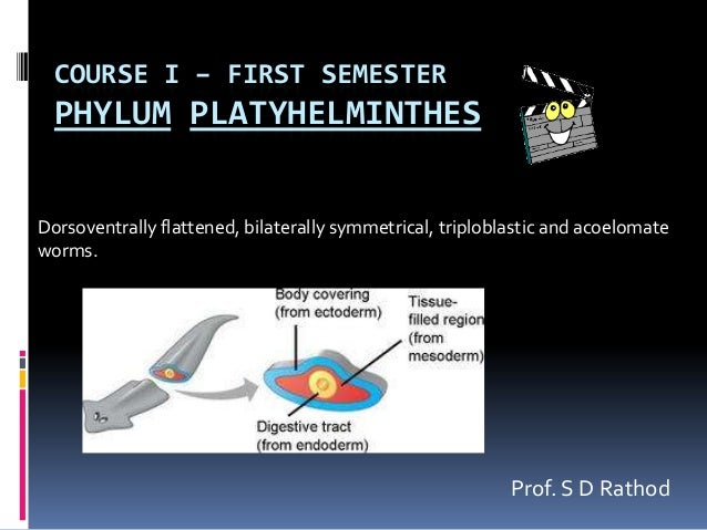 COURSE I – FIRST SEMESTER  PHYLUM PLATYHELMINTHESDorsoventrally flattened, bilaterally symmetrical, triploblastic and acoe...