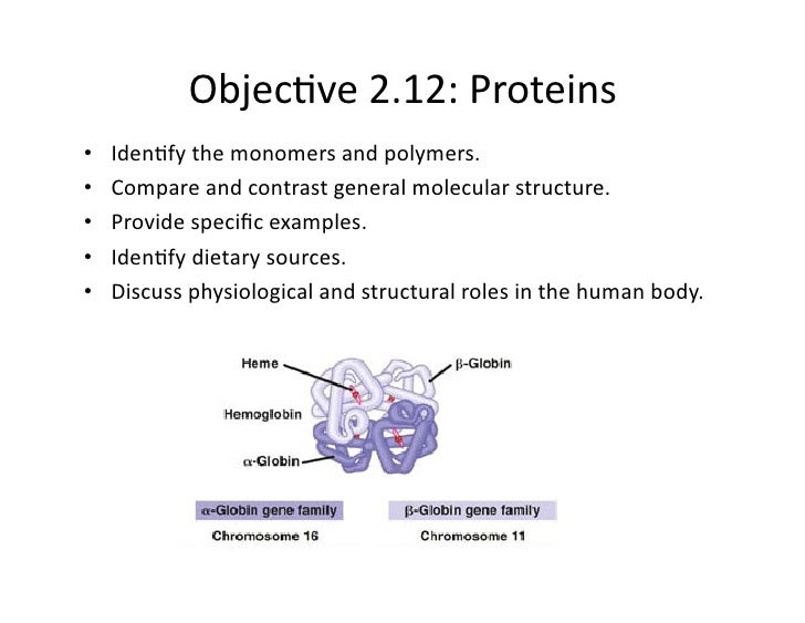 Phys 02 12 Protein