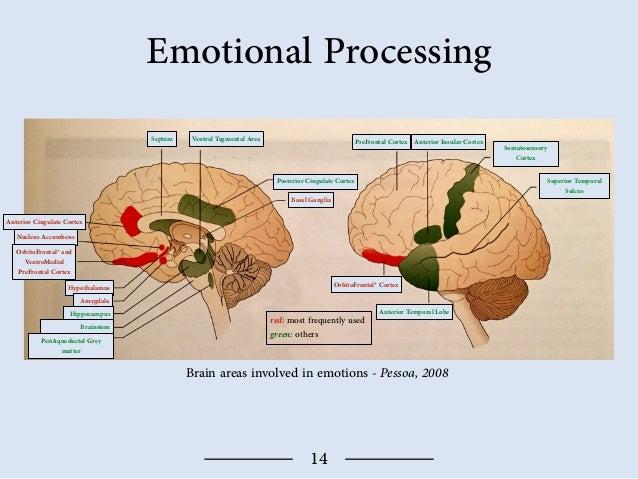 Different Emotional Responses