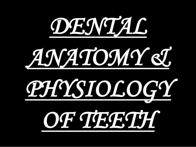 dental anatomy & physiology of permanent teeth