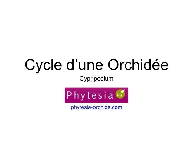 Cycle d'une Orchidée Cypripedium phytesia-orchids.com