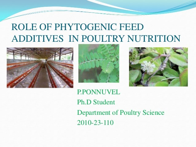 ROLE OF PHYTOGENIC FEEDADDITIVES IN POULTRY NUTRITION           P.PONNUVEL           Ph.D Student           Department of ...