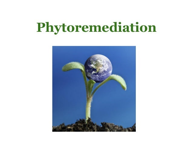 Phytoremediation research papers