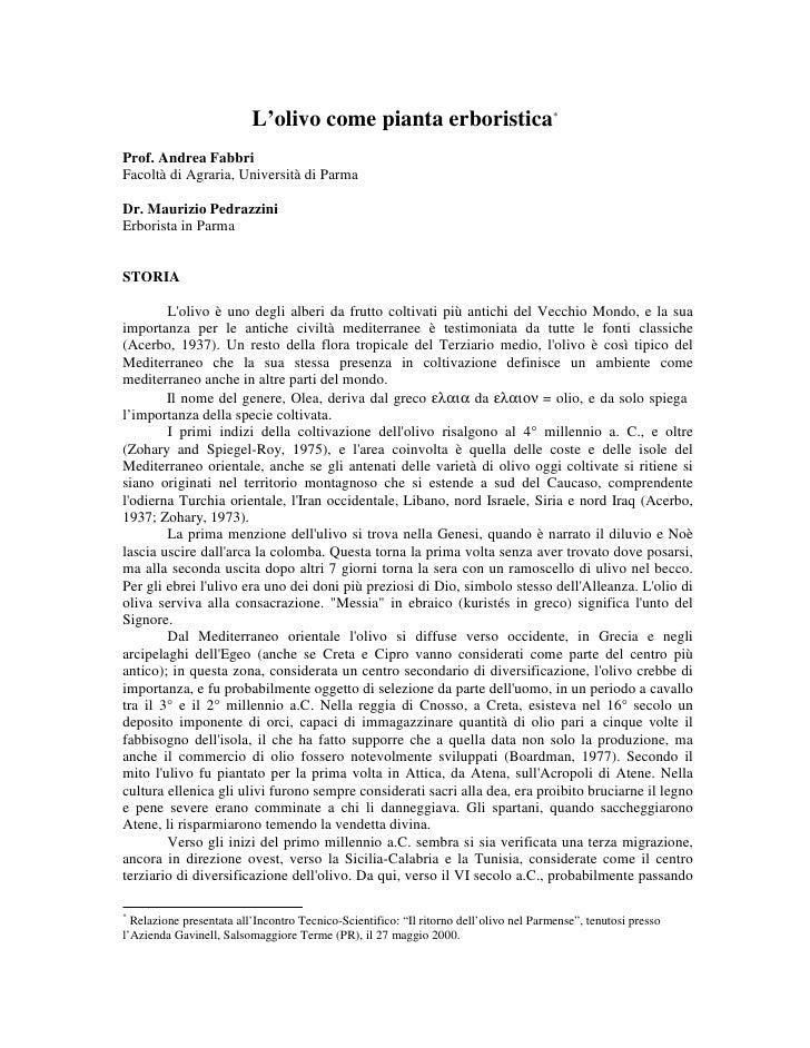 L'olivo come pianta erboristica*Prof. Andrea FabbriFacoltà di Agraria, Università di ParmaDr. Maurizio PedrazziniErborista...