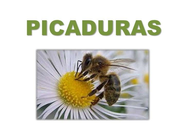PICADURAS<br />