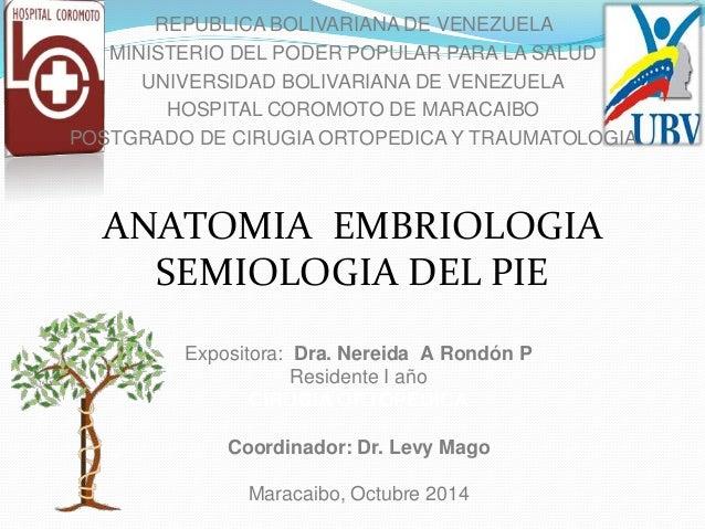 Expositora: Dra. Nereida A Rondón P Residente I año CIRUGIA ORTOPEDICA Coordinador: Dr. Levy Mago Maracaibo, Octubre 2014 ...