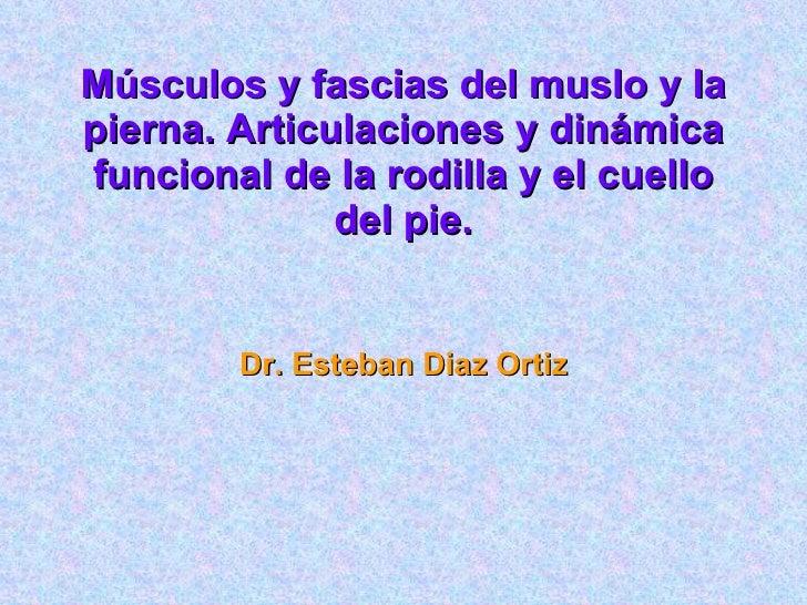 Músculos y fascias del muslo y la pierna. Articulaciones y dinámica funcional de la rodilla y el cuello del pie. Dr. Esteb...