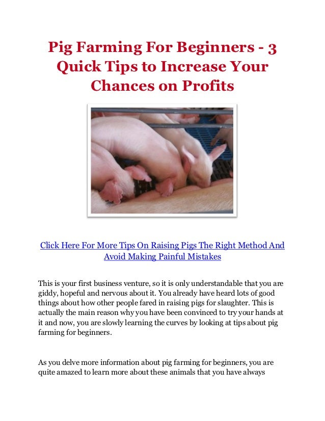 Pig Farming For Beginners - 3 Quick Tips to Increase Your Chances On Profits