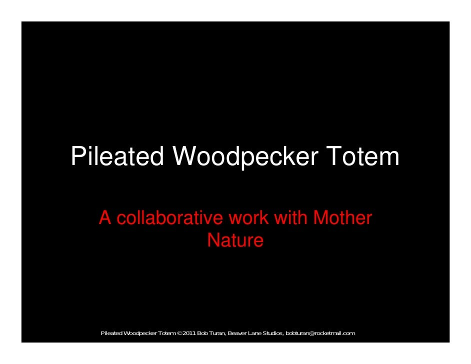 Pileated Woodpecker Totem  A collaborative work with Mother               Nature  Pileated Woodpecker Totem © 2011 Bob Tur...