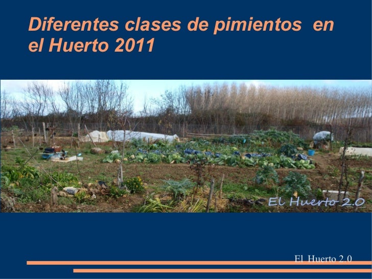 Diferentes tipos de pimientos de la cosecha 2011