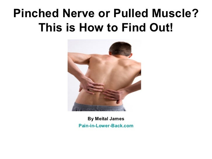 Pinched Nerve or Pulled Muscle?    This is How to Find Out!              By Meital James          Pain-in-Lower-Back.com