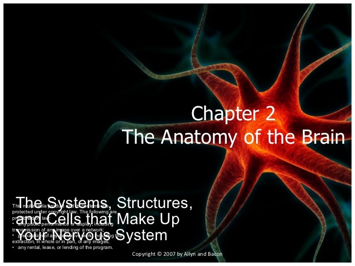 Chapter 2 The Anatomy of the Brain The Systems, Structures, and Cells that Make Up Your Nervous System Copyright © 2007 by...