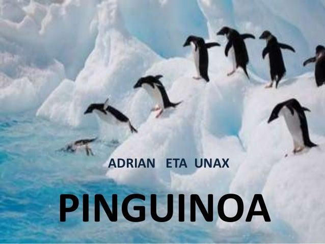 PINGUINOA ADRIAN ETA UNAX
