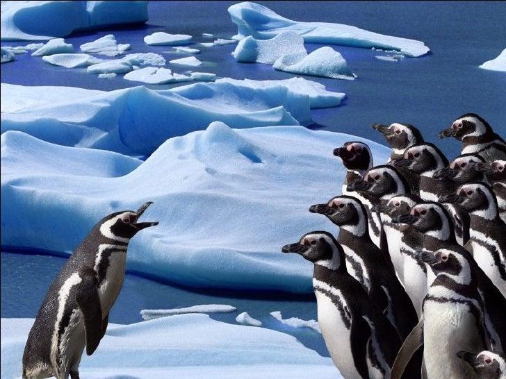 Pingvinukai