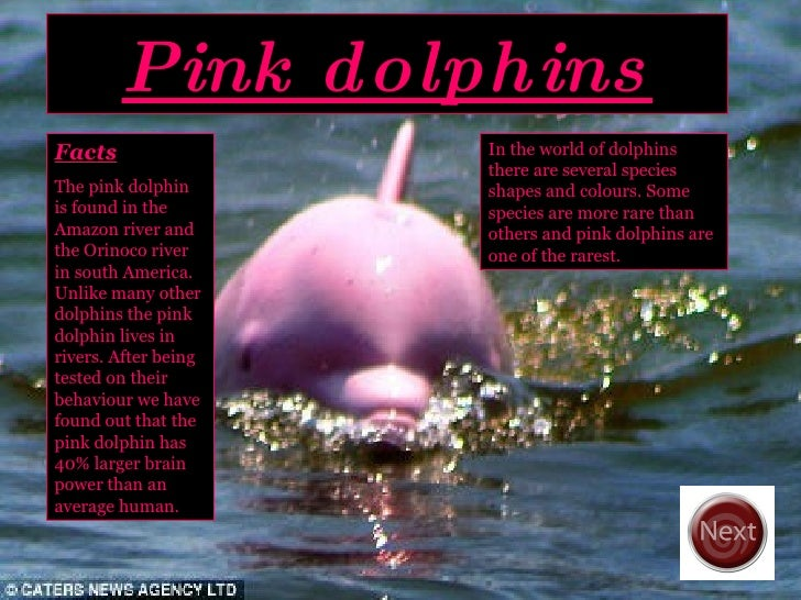 Pink dolphins In the world of dolphins there are several species shapes and colours. Some species are more rare than other...
