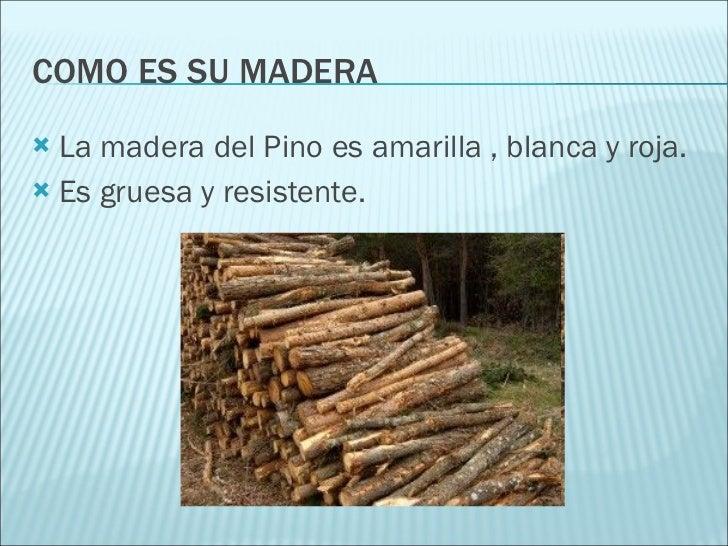 El pino - Maderas el pino ...