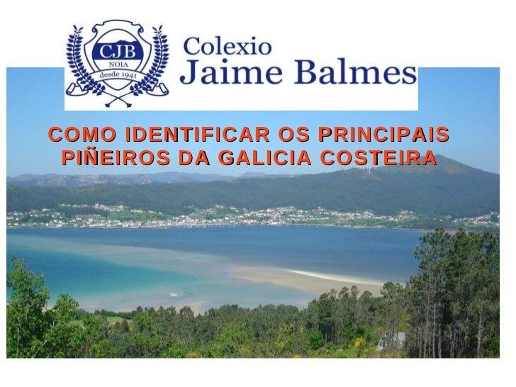 COMO IDENTIFICAR OS PRINCIPAIS PIÑEIROS DA GALICIA COSTEIRA