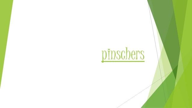 pinschers