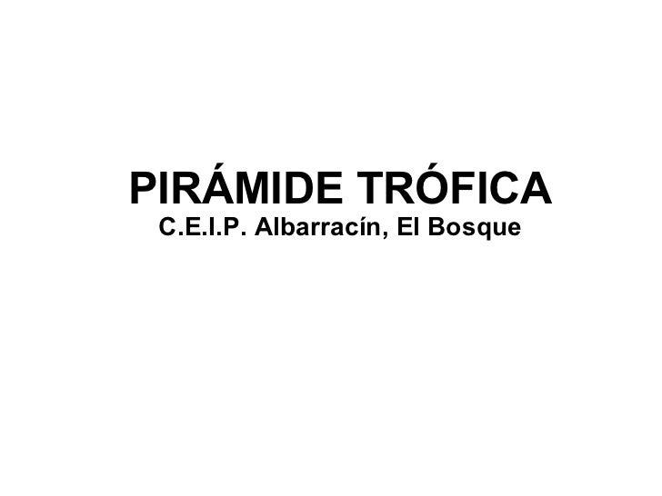 PIRÁMIDE TRÓFICA C.E.I.P. Albarracín, El Bosque