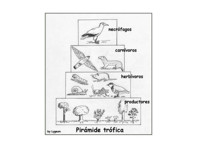 Piramide ecosistema