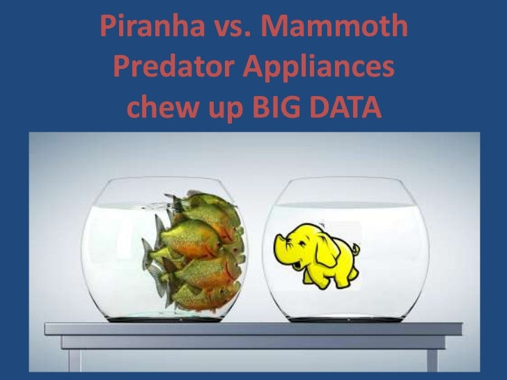 Piranha vs. mammoth   predator appliances that chew up big data