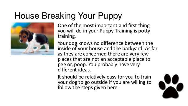 How to Train a Pitbull Puppy
