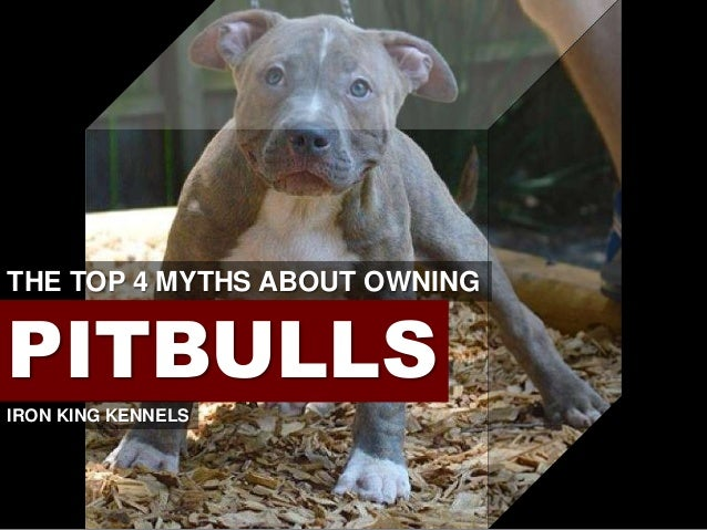 The Top 4 Myths About Owning a Pitbull
