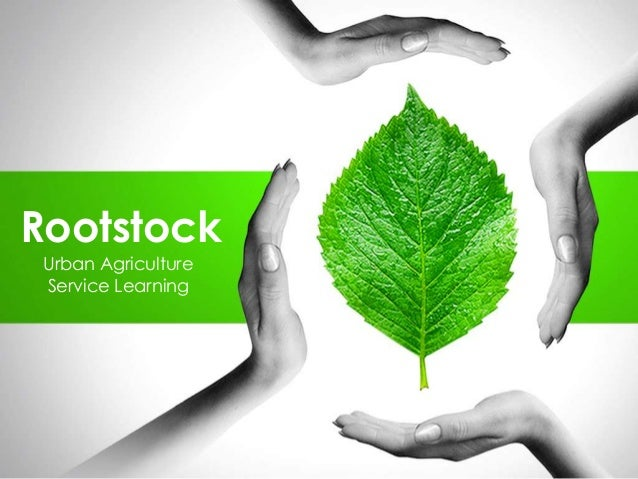 Rootstock Pitch Deck (v1)