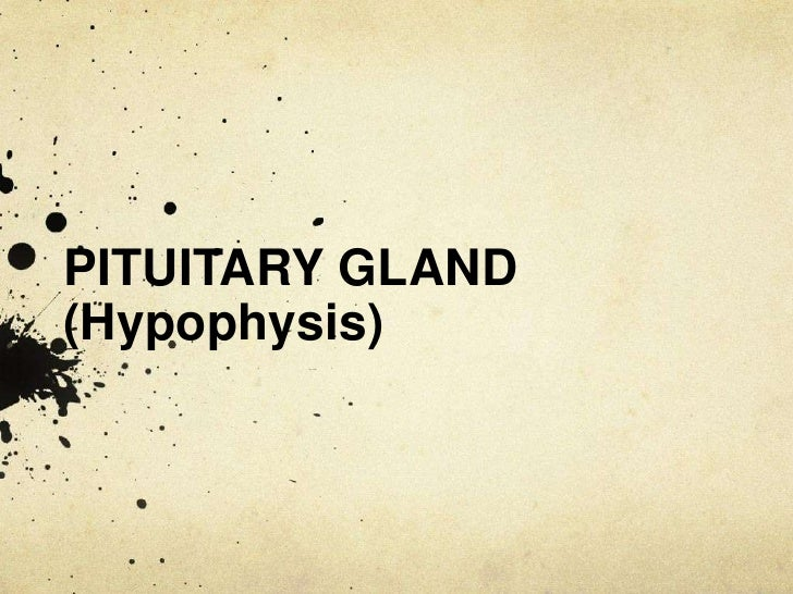 PITUITARY GLAND (Hypophysis)<br />