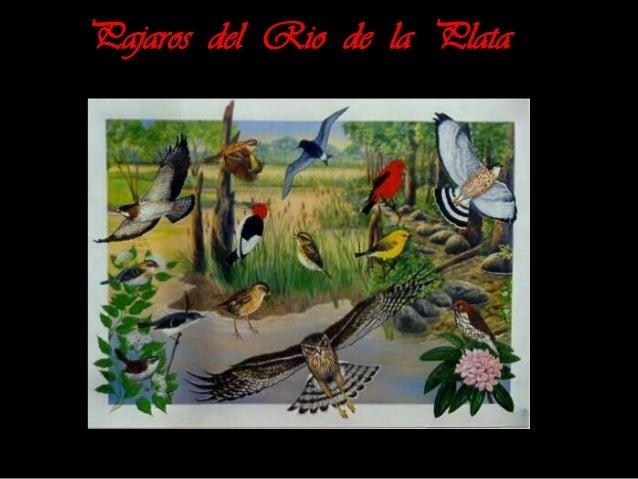 Pajaros del Rio de la Plata