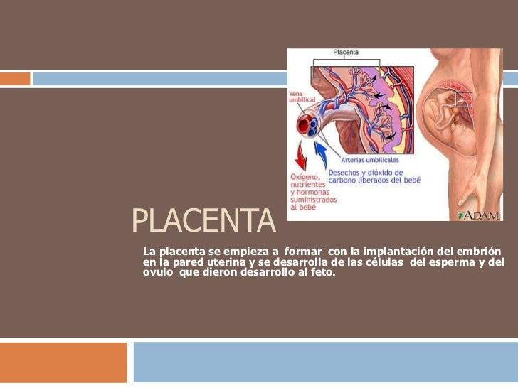 PLACENTA<br />La placenta se empieza a  formar  con la implantación del embrión en la pared uterina y se desarrolla de las...