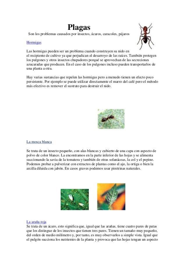 Plagas Son los problemas causados por insectos, ácaros, caracoles, pájaros Hormigas Las hormigas pueden ser un problema cu...