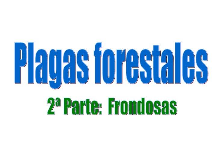 Plagas forestales 2ª Parte:  Frondosas