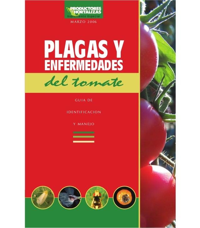 Plagas y enfermedades del tomate x prod de hort 2006