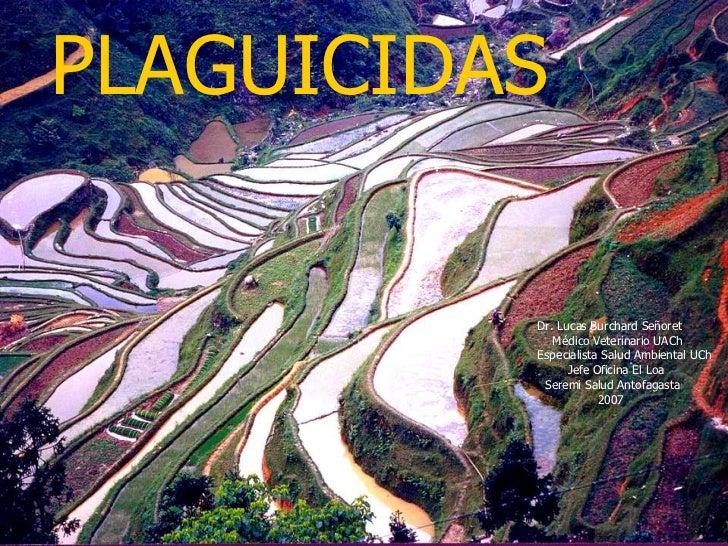 PLAGUICIDAS Dr. Lucas Burchard Señoret Médico Veterinario UACh Especialista Salud Ambiental UCh Jefe Oficina El Loa Seremi...